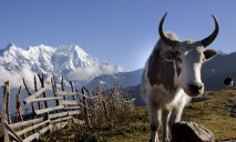 Langtang Valley Trekking - 10 Days